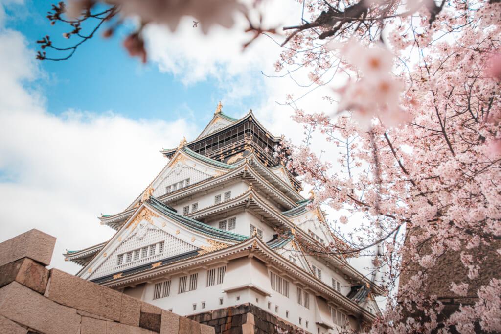 cerezos en flor en el castillo de osaka