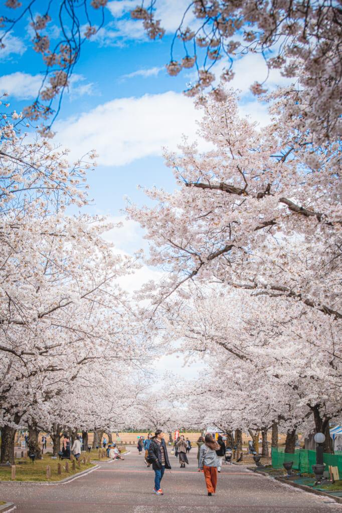 cerezos en flor en el parque Expo '70 osaka