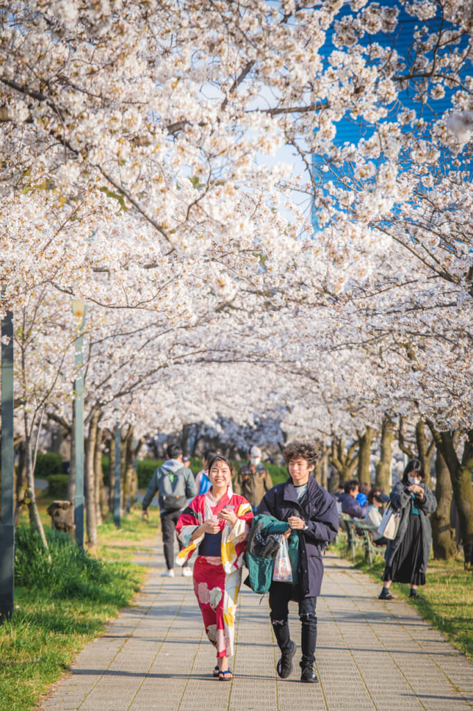 pareja caminando entre flores de cerezo