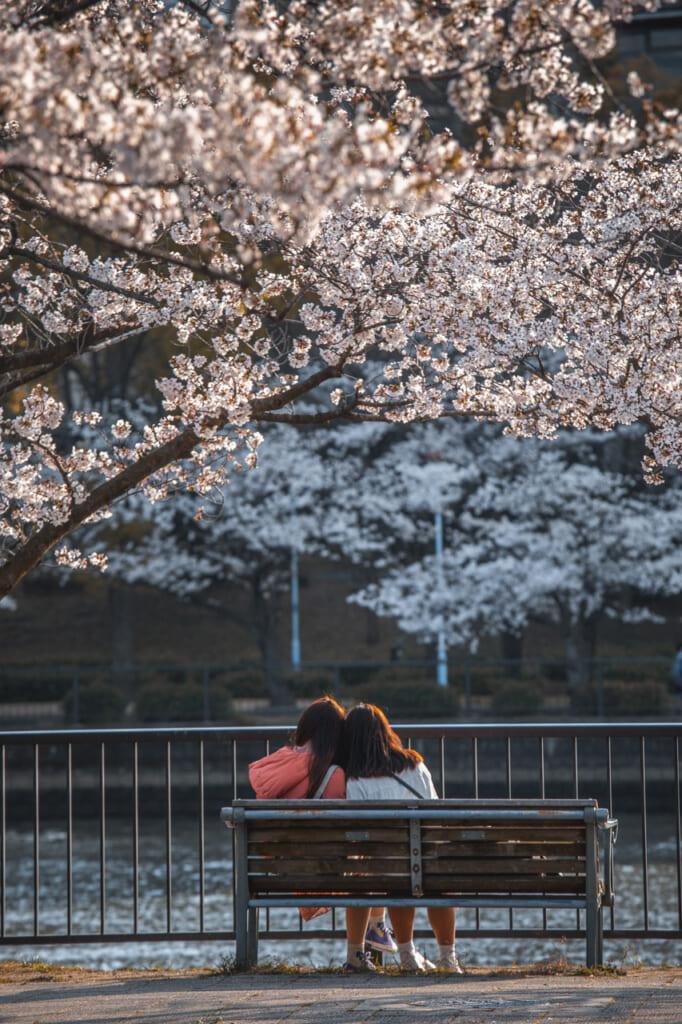 chicas en banco bajo cerezo en flor