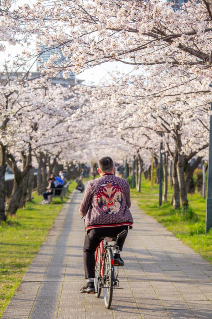 persona montando en bici entre flores de cerezo