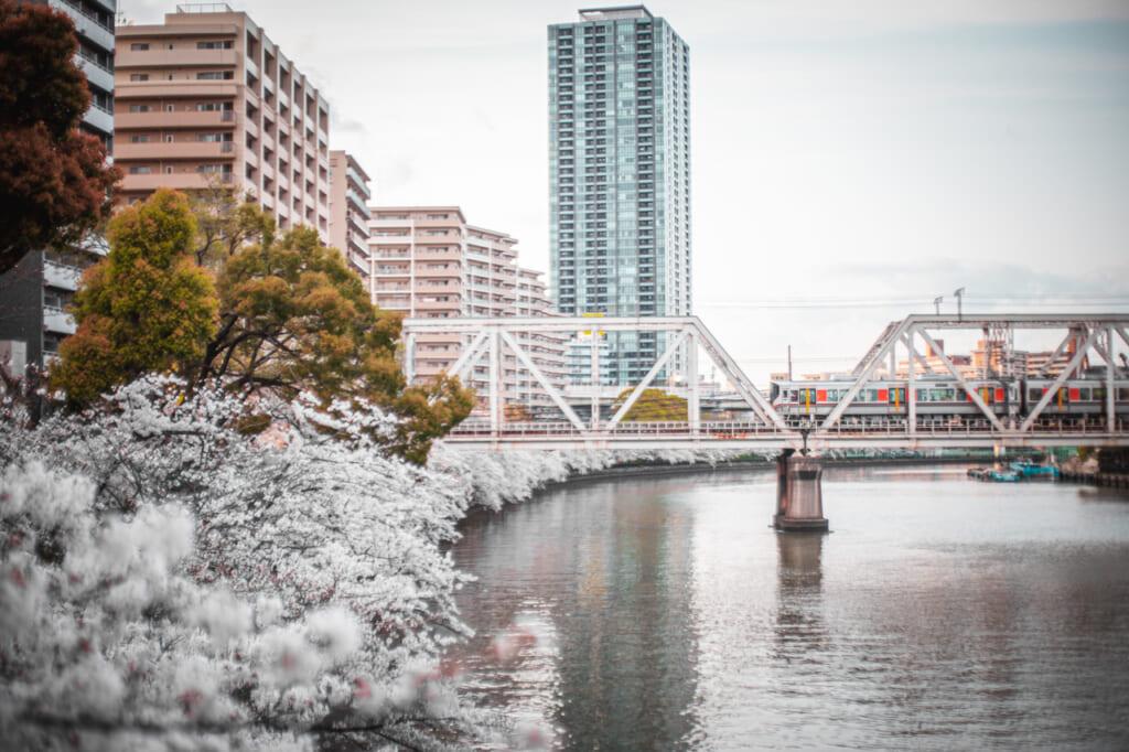cerezos en flor y tren sobre el rio Okawa en Osaka