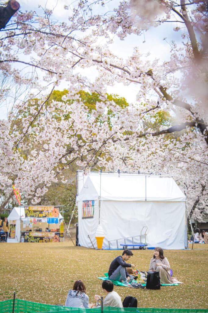 personas haciendo hanami en pájaro posado en un cerezos en flor en el parque expo '70 osaka