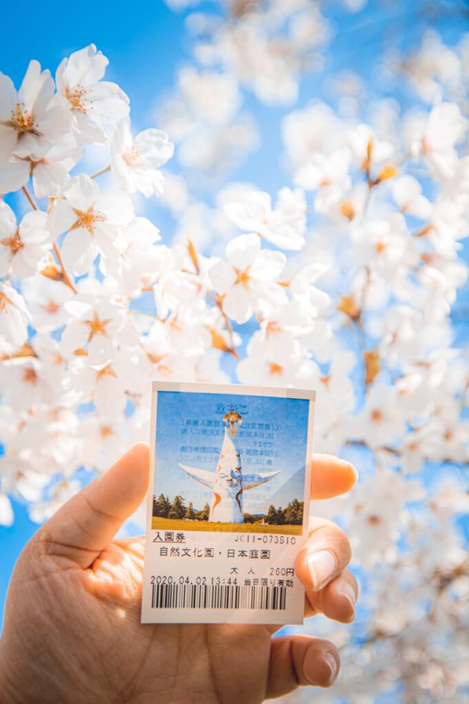cerezos en flor y entrada del parque expo '70 osaka