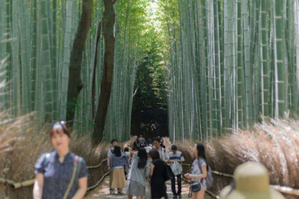 La imagen conocida del bosque de bambú de Arashiyama