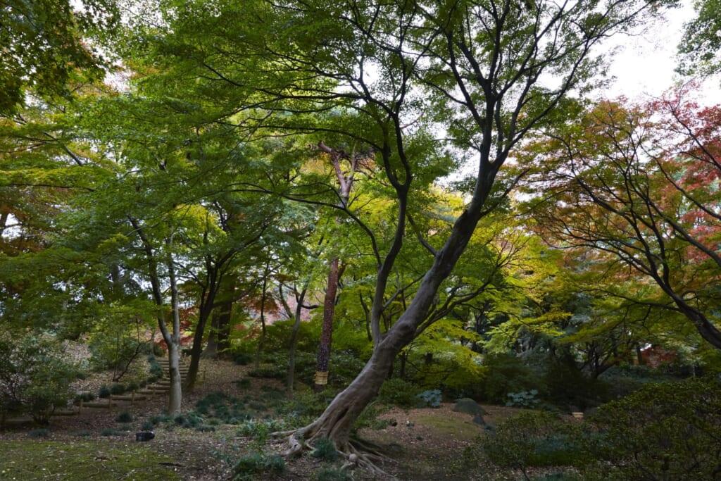 Los jardines japoneses en Tokio de Rikugi-en durante otoño