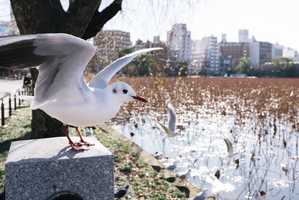 El estanque de Shinobazu con una gaviota en primer plano
