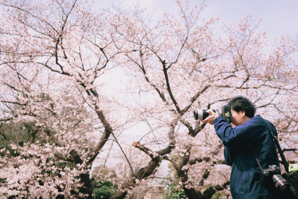 Jardines japoneses de Tokio: Cerezos en flor en el parque de Ueno, en Tokio
