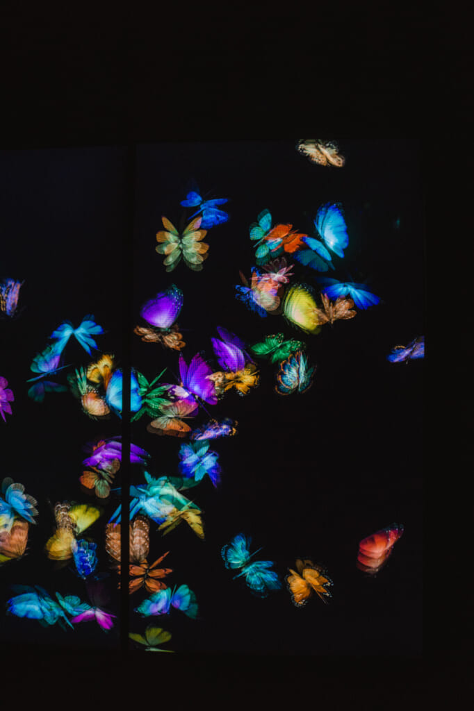 mariposas digitales en una de las salas del museo