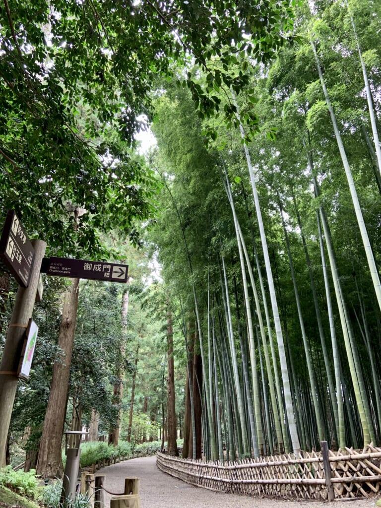 La zona con bambú del jardín Kairakuen
