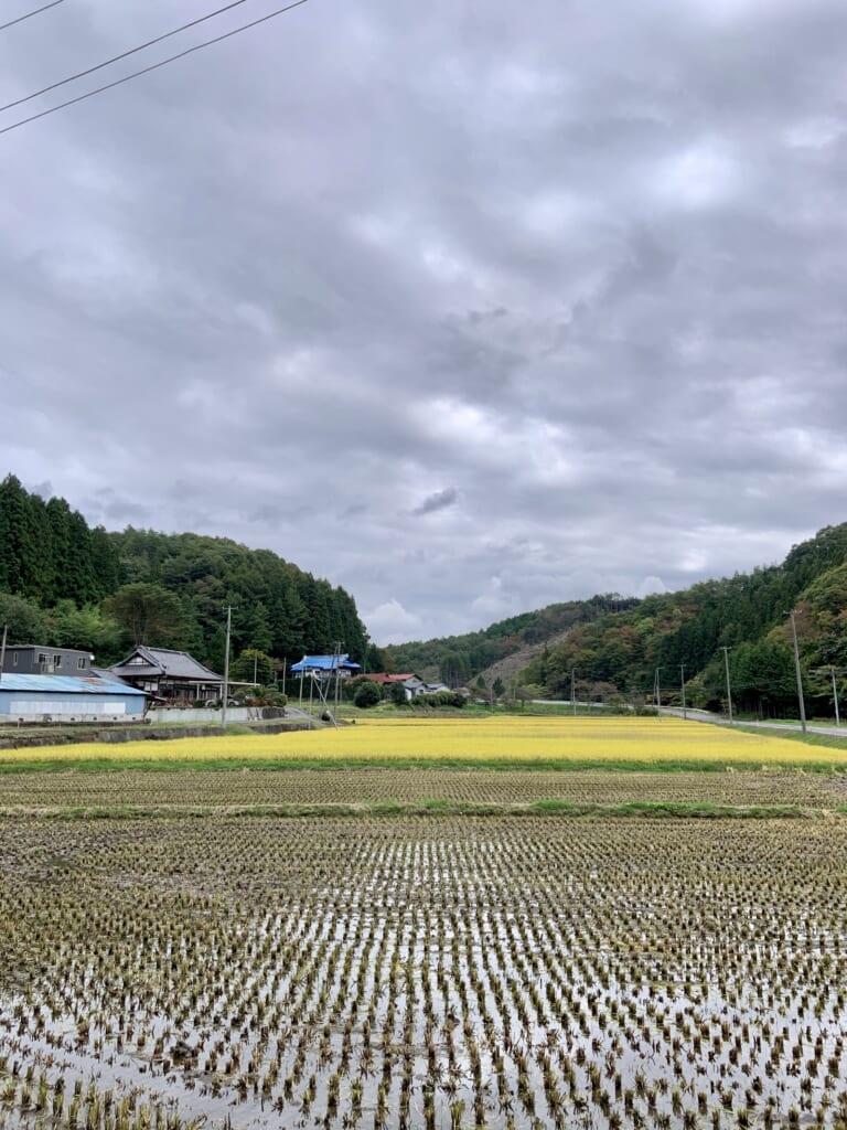 Campos japoneses