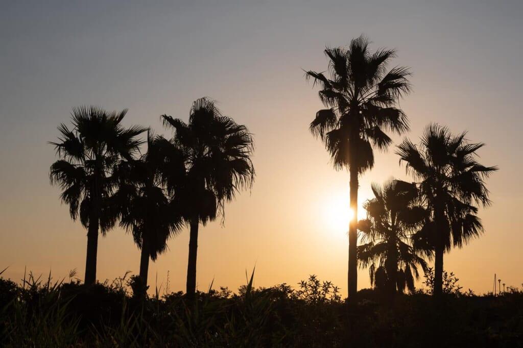 un paisaje matutino de la isla de Enoshima