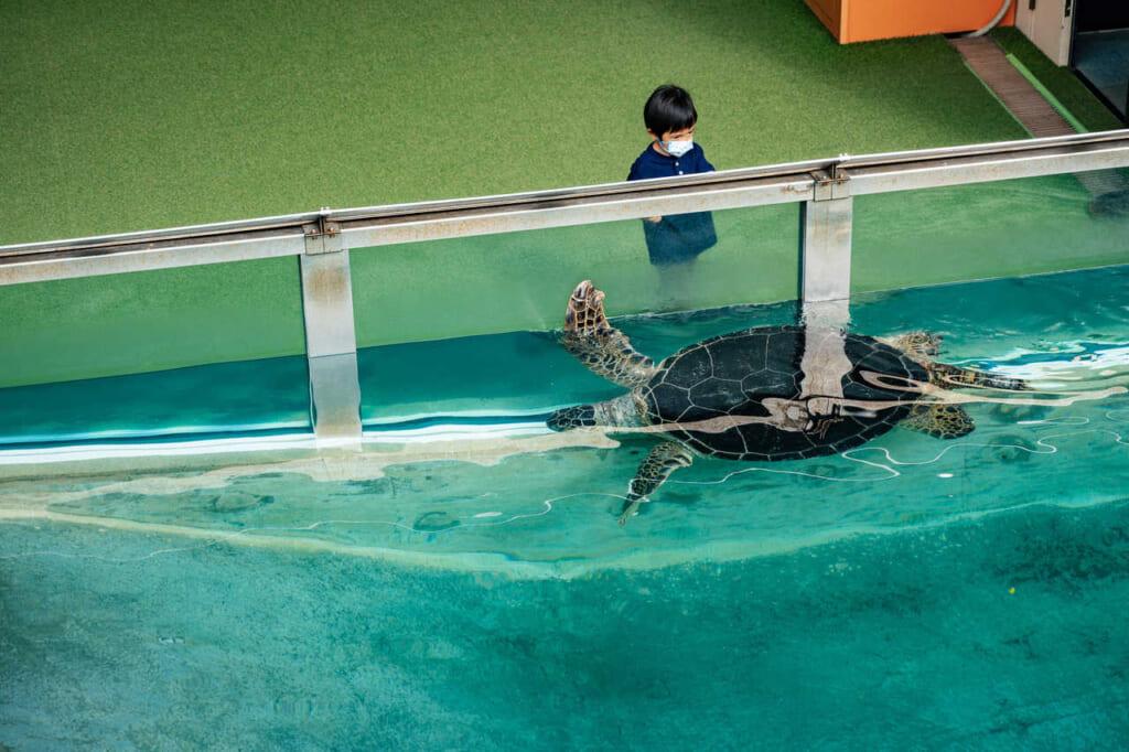 Una tortuga saludando a un niño