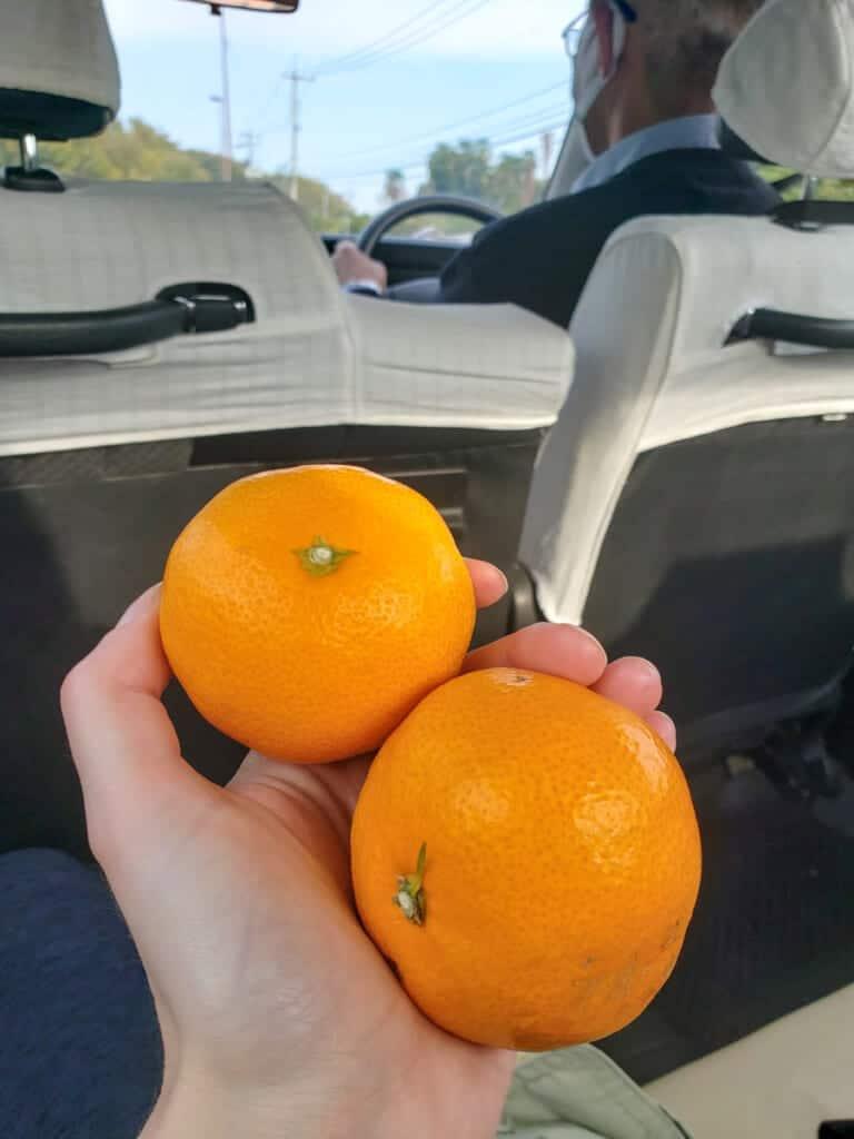 Las mandarinas que me regalaron