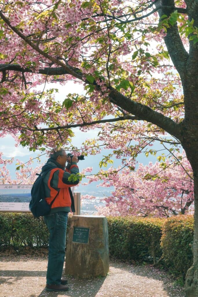 Un hombre japonés sacando fotos en el Festival de los Cerezos en Flor de Matsuda