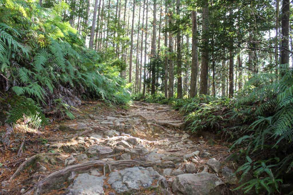 La ruta está rodeada de naturaleza salvaje, en la prefectura de Wakayama