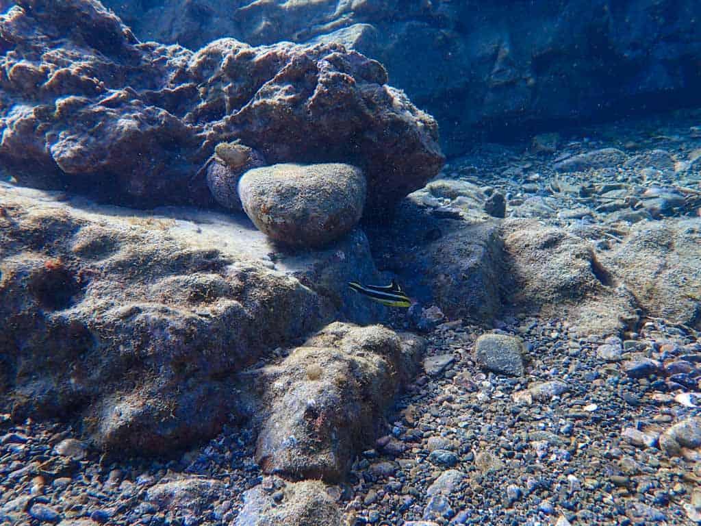 El fondo marino y el coral en Wakayama