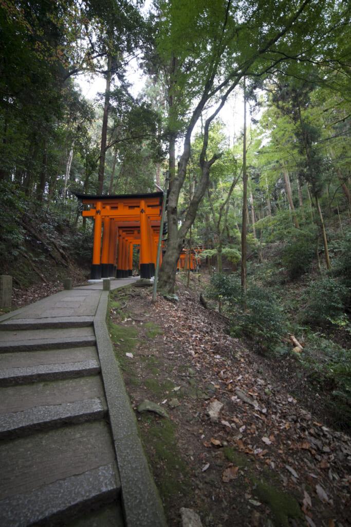 disfrutar del bosque en fushimi inari con el Hokuriku Arch Pass