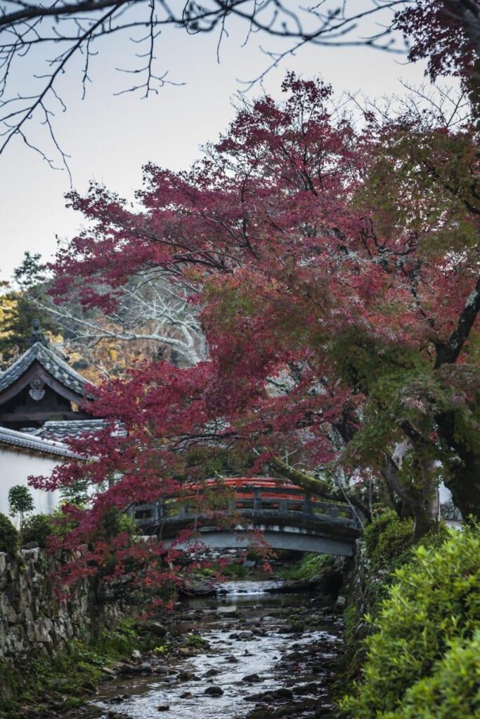 Puente y momiji en Amanosan Kongoji