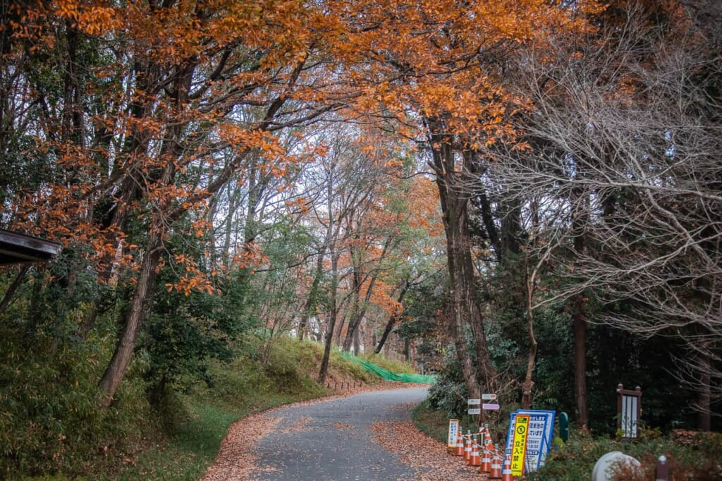 un camino de shinri koen en Saitama