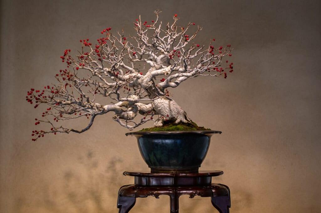 Un bonsai en el Museo del Bonsai de Omiya