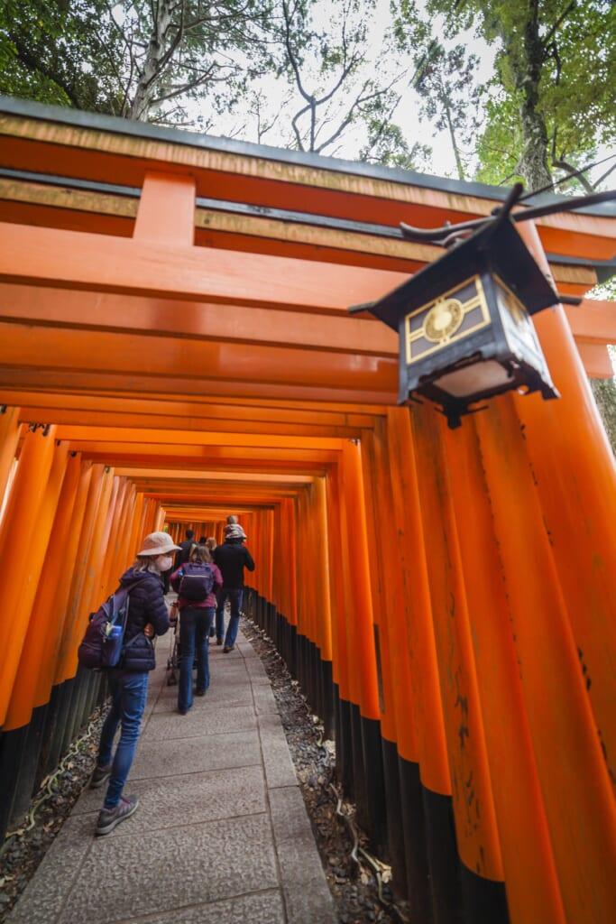 Mil puertas torii