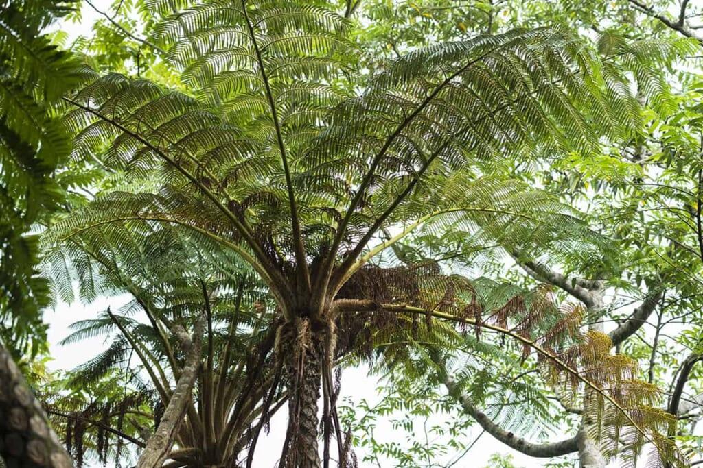 Palmeras tropicales en el norte de Okinawa
