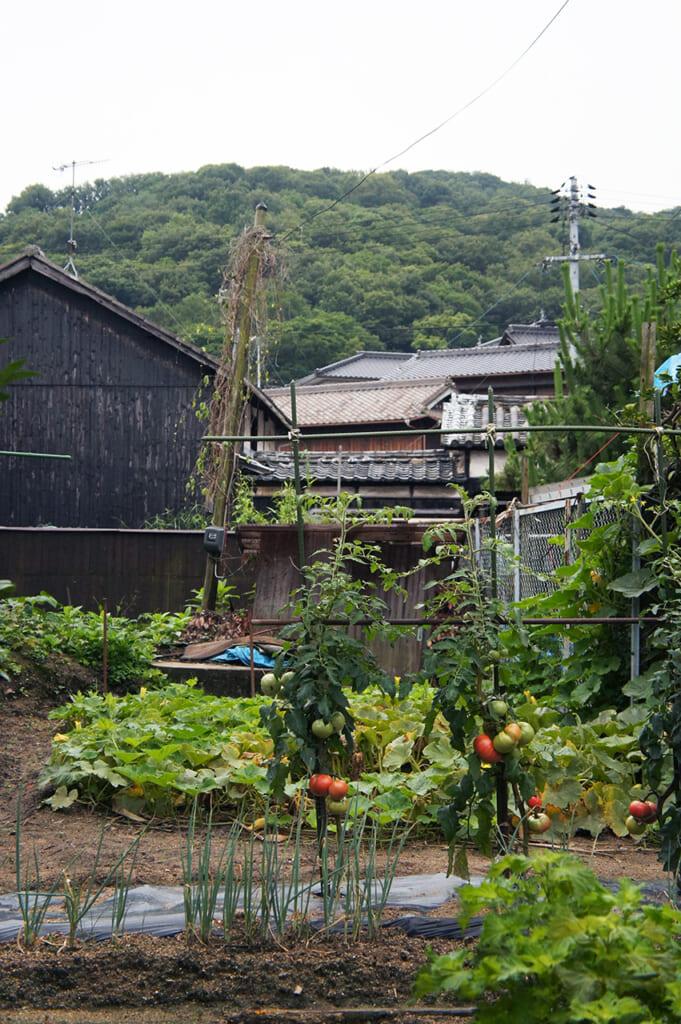 Huerto en un pueblo japonés de Manabeshima