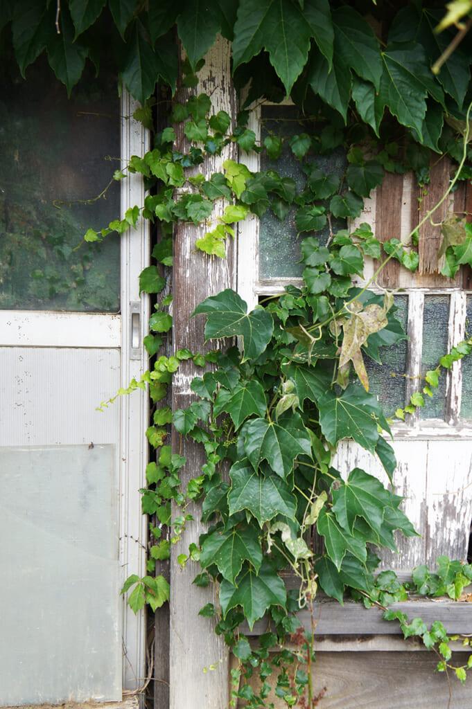 Casa abandonada invadida por la vegetación