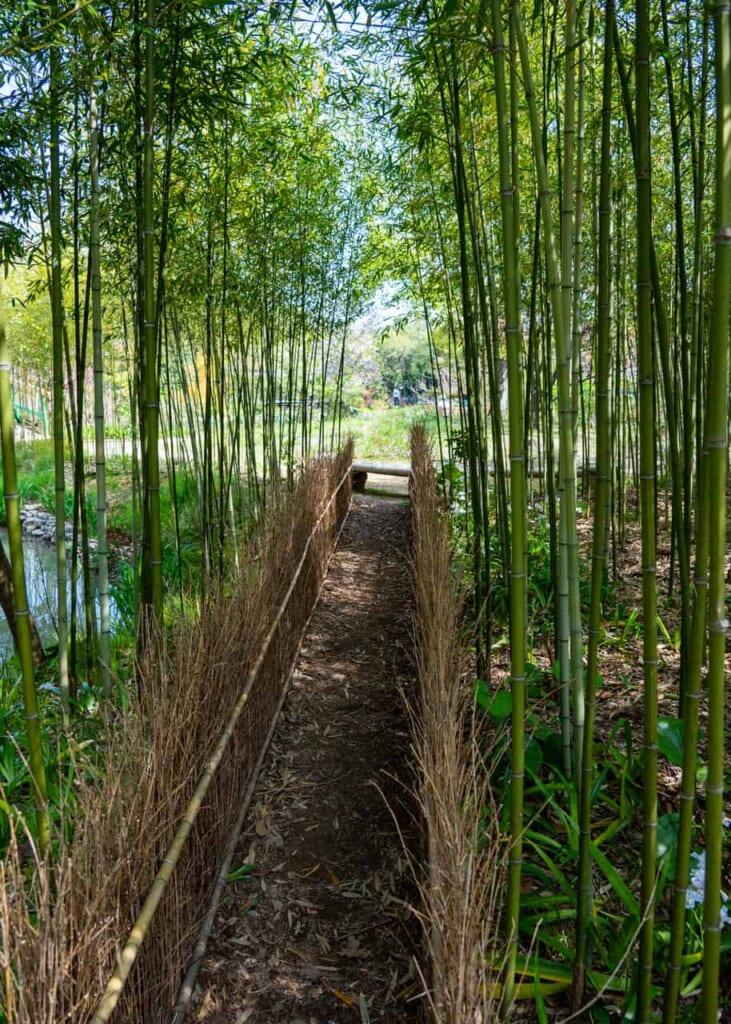 Un bosque de bambú en Hamanako Garden Park, en Hamamatsu