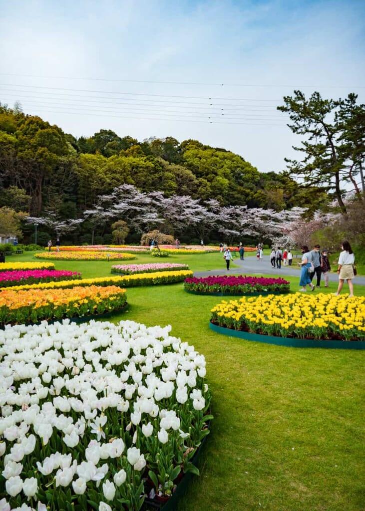 El parque de las flores ordenadas por colores
