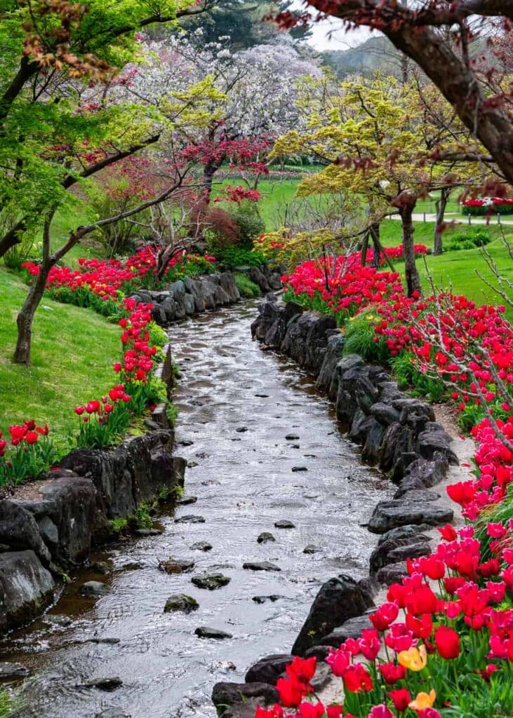 Un camino de flores rojas rodeando el río