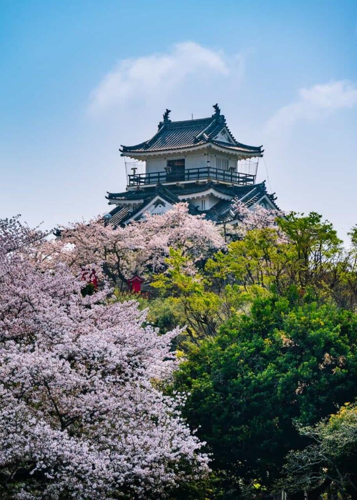 Los cerezos rodeando el castillo de Hamamatsu