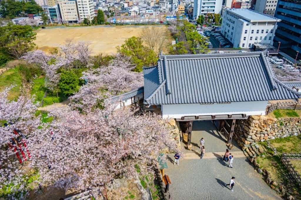 Vista desde arriba de la distribución de los cerezos en flor desde la entrada del templo