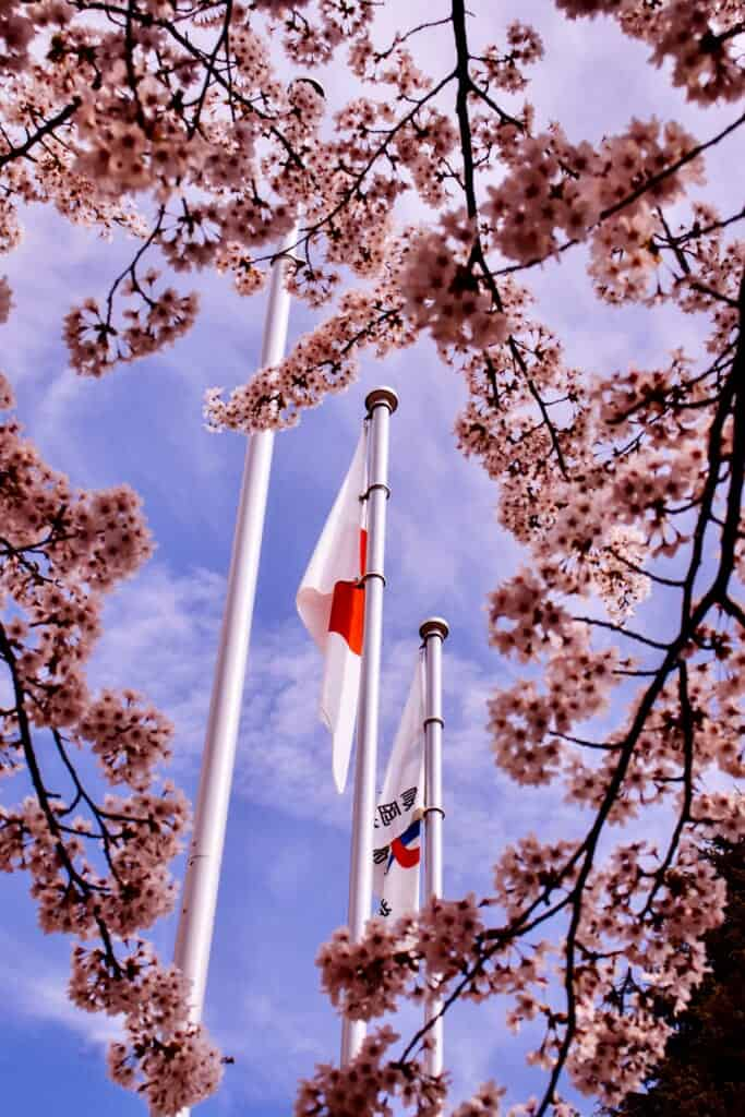 La bandera japonesa vista detrás de los cerezos en flor