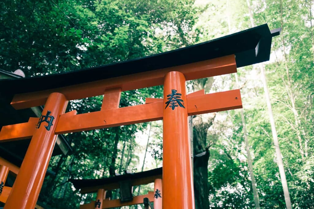 Un torii rodeado de naturaleza en Kioto