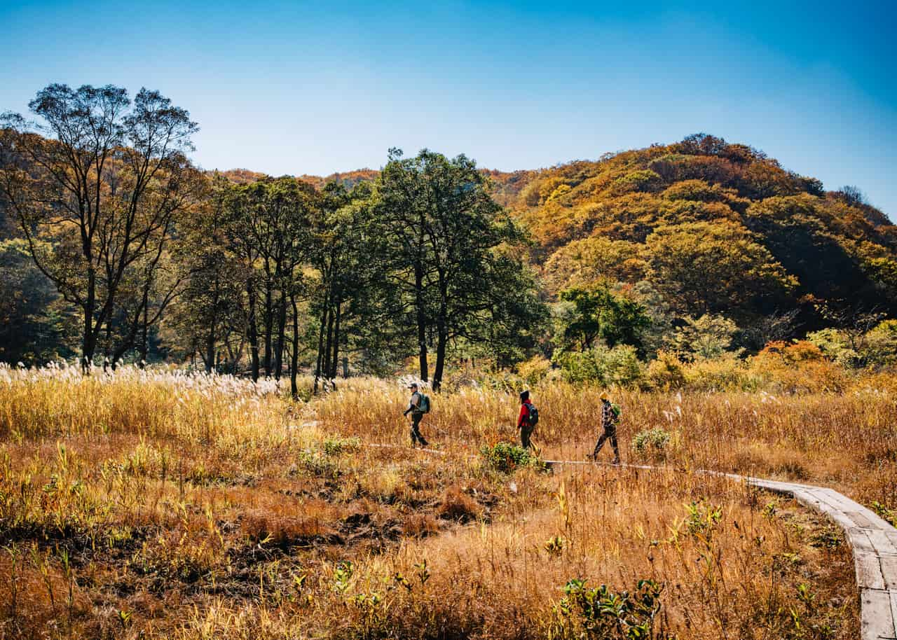 El Sendero Shin-etsu: disfrutando de sus increíbles colores otoñales