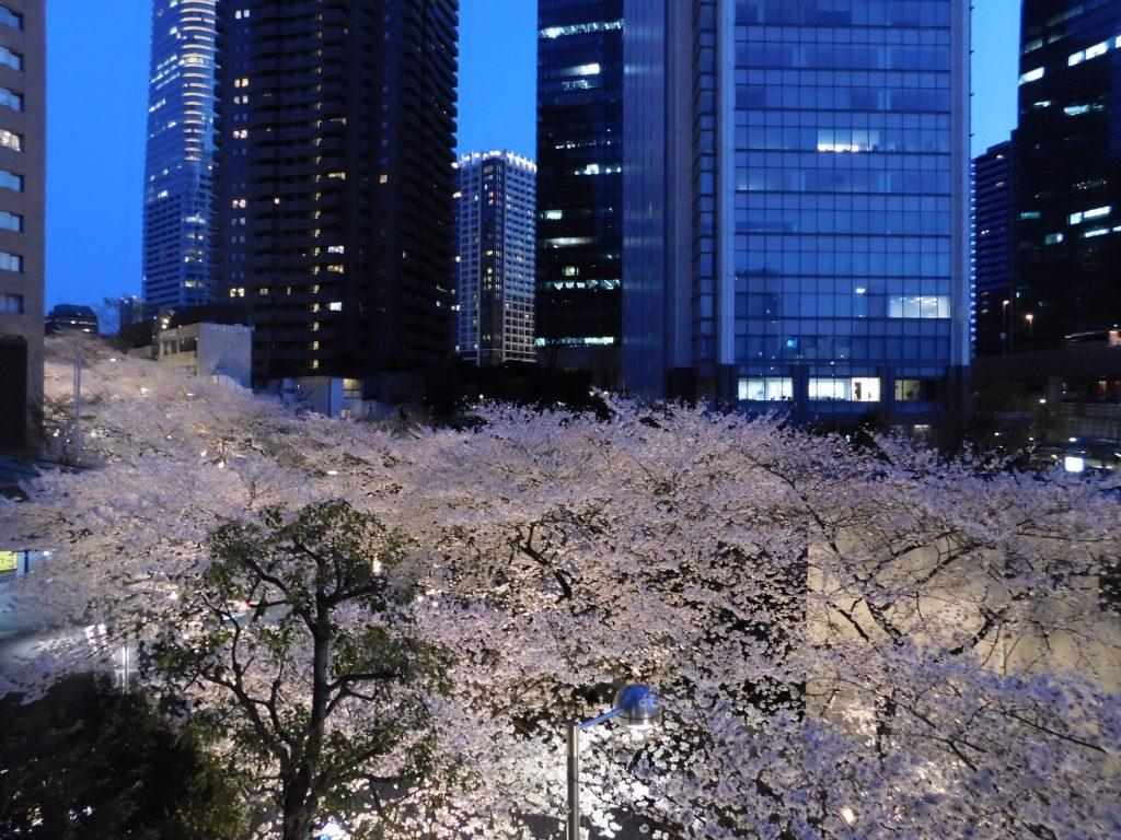 Kirschblüte in Tokio: Roppongi Ark Hills