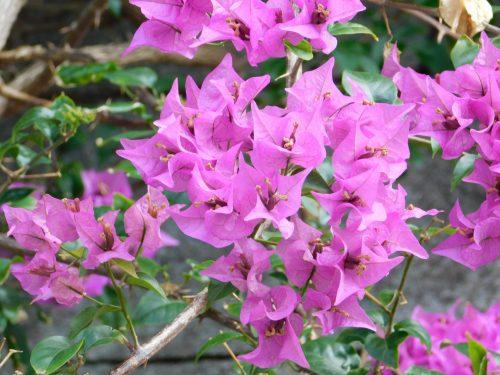 Willkommen auf Okinawa mit seiner faszinierenden Flora und Fauna!