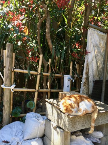 Enoshima ist auch bekannt als Katzeninsel.