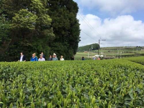 Die Teefelder von Higashisonogi.