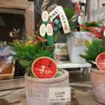 Neujahr mit einer japanischen Familie in Niigata