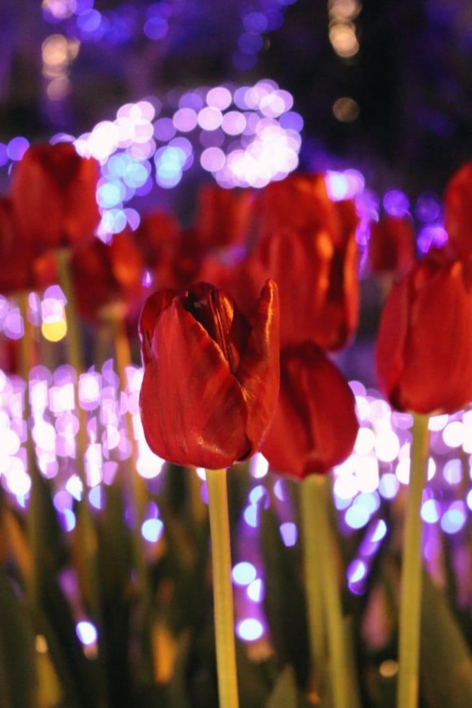 Die Tulpen und die Illumination bieten die Grundlage für ein perfektes Foto.