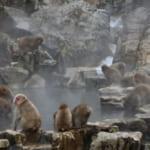 Ein Besuch bei den Affen in den heißen Quellen von Nagano