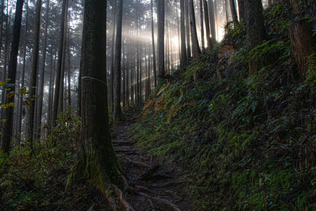 Der mystische Wald vom Berg Mitake.