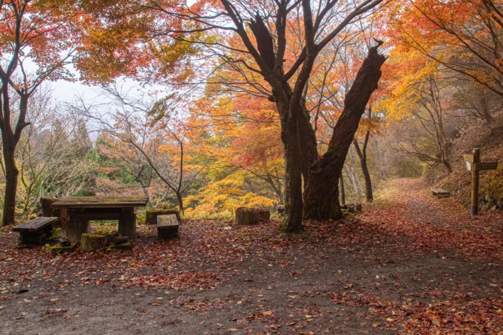 Während der Momiji Zeit erstrahlt der Wald in Farbtönen von Geld, Orange und Rot.