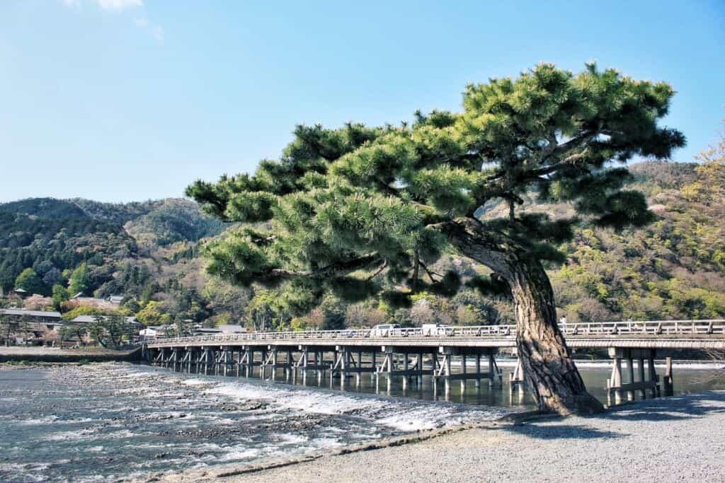 Ein Baum vor der Togetsukyo Brücke in Arashiyama.