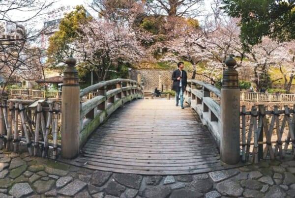 Kirschblüten im Otonashi Shinsui Park in Oji, Tokio, Japan.