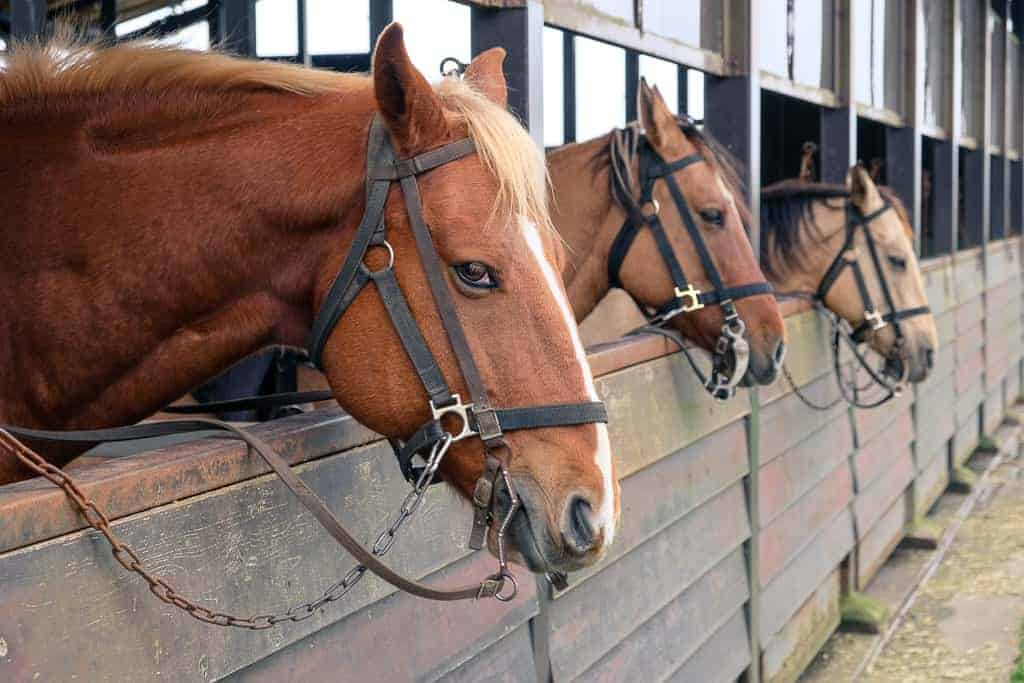 Pferde in Japan.