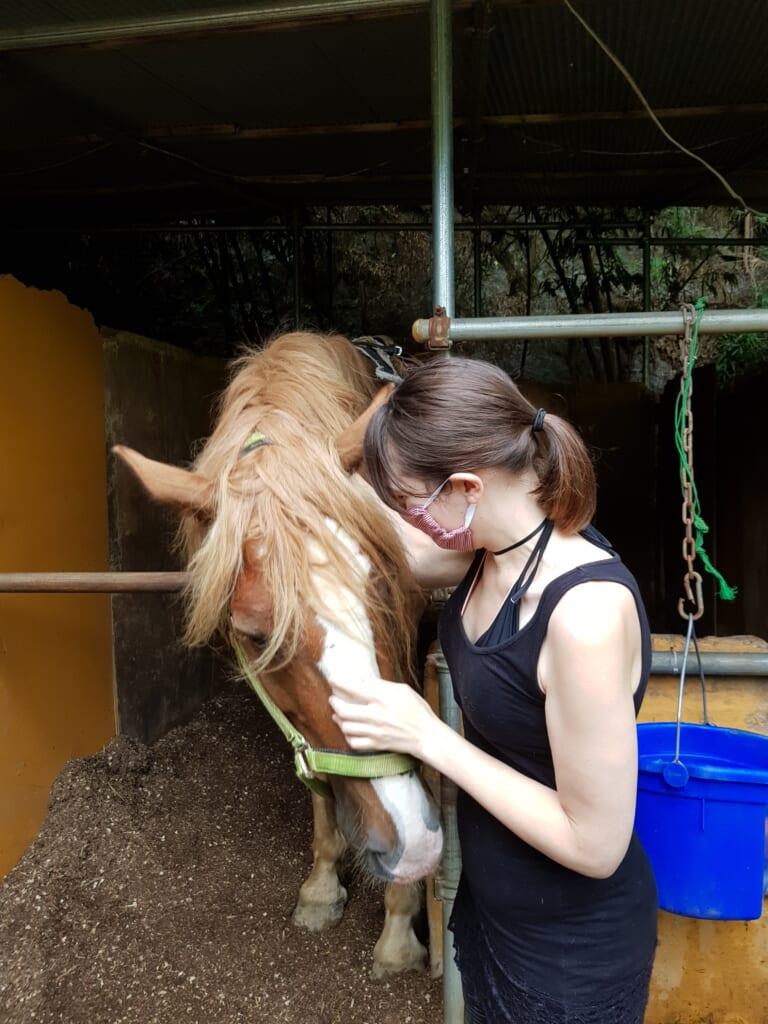 Die Pferde in Japan kennenlernen.